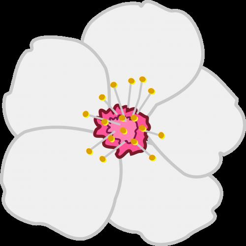 tatuajes para flor de almendro